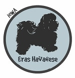 Iowa Havanese Breeders
