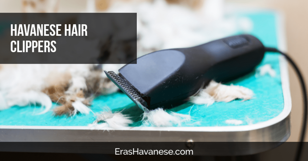 best dog clippers for havanese